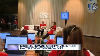 Michigan Humane Society's Valentine's Day Telethon tomorrow on 7 Action News