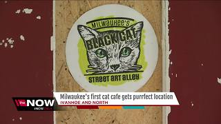 Milwaukee's first cat cafe 'Sip & Purr' announces location on city's East Side - Video