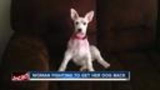 Davenport pet owner fights to get dog back after losing it - Video