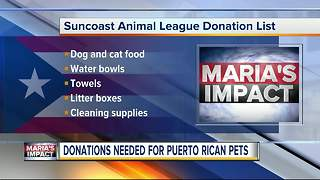 Donations needed for dozens of dogs and cats rescued from Puerto Rico - Video