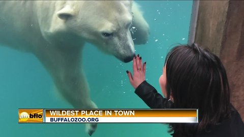 The Wildest Place in Town – The Buffalo Zoo