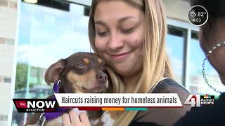 Haircuts raise money for homeless animals