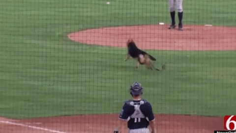 Tulsa Bark at the Park Takes a 'Ruff' Turn When Rogue Pup Chases Baseball Across Field