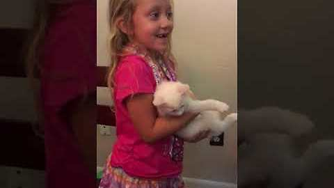 Lucky Girl Gets Surprised With Two Kittens For Her Birthday