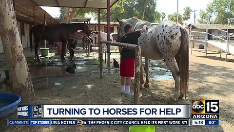 Turning to horses for help