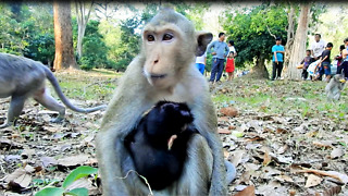 April Bring Her Baby Monkey For Food  - Video