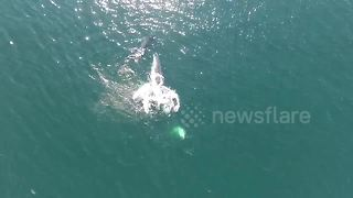 Mother whale gives baby a back ride off Mexico - Video