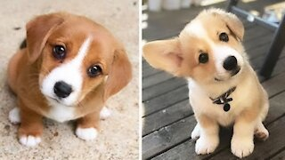 Cute Puppies 😍 Cute Funny and Smart Dogs Compilation _ Cute Buddy