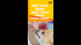 Human foods that your dogs should not eat *