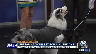 Prepare your pet for tropical weather