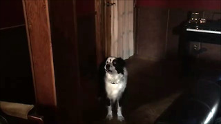 Defiant dog has argument with owner over barking in the house - Video