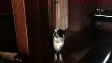Defiant dog has argument with owner over barking in the house