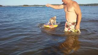 Adorable Dog Learns How To Surf - Video