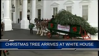 White House Welcomes 2018 Christmas tree