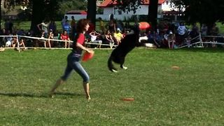 Dog Frisbee Championships - Video