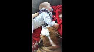 Bulldog and baby preciously nap together