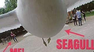 Stop Thief! Cheeky Seagull Nabs GoPro
