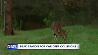 Watch out for deer - Video