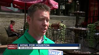 Howl for Houston: Foster parents needed for pets displaced by Harvey - Video