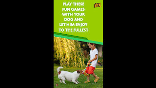 Top 4 Fun Games To Play With Your Dog