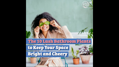 The 10 Lush Bathroom Plants to Keep Your Space Bright and Cheery