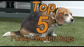 Dog Shelter Releases 'Top 5 Funny Shelter Dogs' Compilation - Video