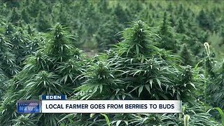 Local farmer goes from berries to buds