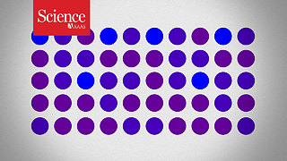 Are these dots purple or blue? Your answer might not be as reliable as you think - Video