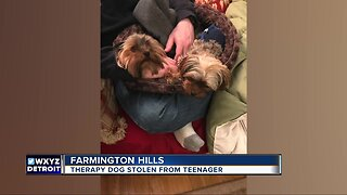 Therapy dog stolen from teenager