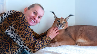 Wild Cat Fanatic Lives With 14 Felines | BEAST BUDDIES - Video