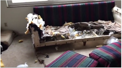 Dog Decimates Couch Because Her Owner Left Her Alone At Home