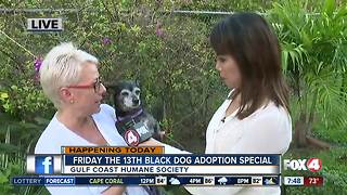 Gulf Coast Humane Society adoption special - Video