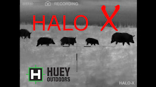 HALO X FIRST HUNTING FOOTAGE
