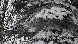 June Snow Blankets Parts of Newfoundland - Video