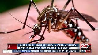 West Nile Virus found in Kern County - Video