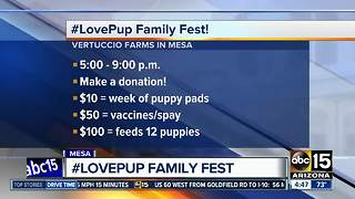 Enjoy the #LovePup family fest in Mesa this weekend - Video