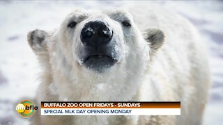 BUFFALO ZOO OPEN WEEKENDS