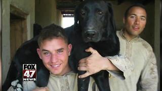 Marine dog with cancer gets tear-filled farewell - Video