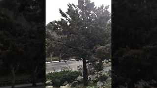 Man Throws Rock Into Garden Tree and This Happens - Video