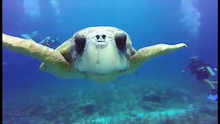 Scuba divers experience an unforgettable visit from giant, friendly sea turtle