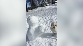 Cute Labrador Destroys Snowman - Video