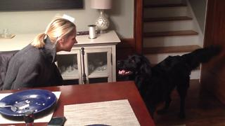 Dog hilariously confused by owner's new hat - Video