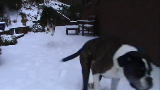 Boxers beyond thrilled for snow day - Video