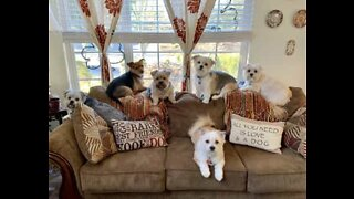 These dogs have an adorable morning routine