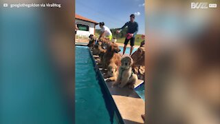 Dogs prefer dip in pool over photo shoot