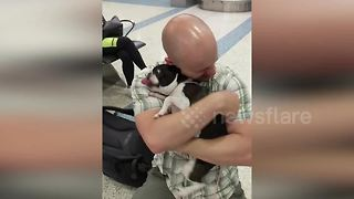 Boston Terrier goes crazy after seeing owner arriving from deployment - Video