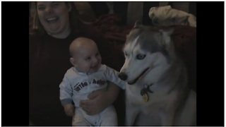 "Baby cracks up every time his husky ""talks"""
