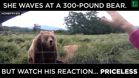 She Waves At 300-Pound Bear. But WATCH His Reaction…PRICELESS!