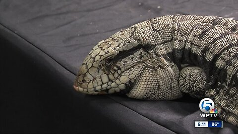 Repticon West Palm Beach draws reptile enthusiasts
