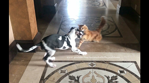 Puppy learns To respect cat's personal space